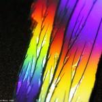 macro_800_arcobaleno